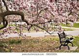 bench under magnolia
