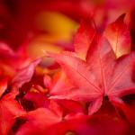 Autumn Offerings