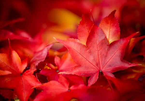 free-autumn-leaves-background